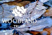 Case Study: How the Woodland Trust improved the eco-friendly nature of its IT