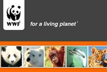 Lucy Parratt, trusts and major individual support executive, WWF-UK