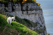 National Trust pays £1m to buy part of Great Orme headland in north Wales
