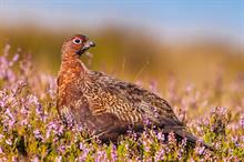 Charity Commission to assess complaint that RSPB spends too little on conservation work