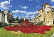 The Big Picture: A river of poppies and cyclists brave the elements for charity