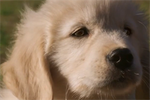GoDaddy: Super Bowl puppy ad 'was not a PR stunt'