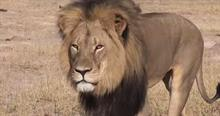 Your call: Would you rep the dentist who killed Cecil the Lion?