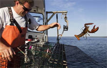 Weber Shandwick catches Maine Lobster integrated account
