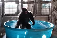 The Dallas Zoo's comms head on why that video of the dancing gorilla went viral