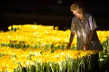 In pictures: Marie Curie's Garden of Light