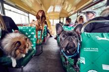 Behind the scenes: More Than's bus tour for dogs