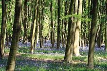 Clock ticking for HS2 tree supply