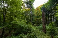 Plant lists used to identify ancient woodland