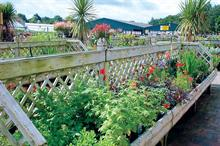 Cooler weather limits bank holiday garden centre sales