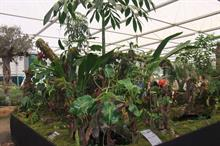 RHS embraces suggestions from BBC to raise profile of plants shown at Chelsea