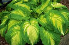 Bowden Hostas secures key site for next year's Chelsea