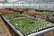 Industry Preview - What lies ahead for horticulture in 2016?