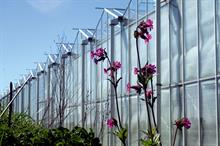 First two glasshouse growers to join farm demonstration network