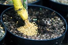 Fertilisers for ornamentals