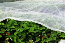 Horticultural fabrics