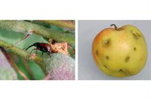 Pest treatments unveiled at fruit seminar