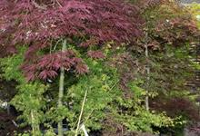 HTA names trees as next 'Plant of the Month'