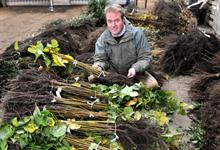 British Hardwood Tree Nursery celebrates 25 years in business