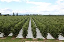"Integrated pest management in orchards ""as good for biodiversity as organic"""