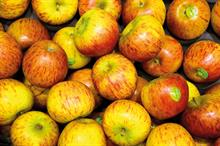 Potential boon identified for British apple growers