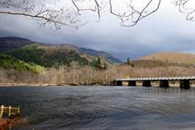 Lottery funding of £3/4m for ancient Caledonian woodland