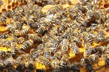 BCPC launches pollinator protection tool