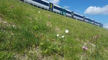 Landscaping gains Network Rail infrastructure project excellent rating