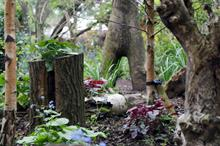 Capel Manor College to create stumpery for Chelsea