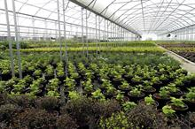 Tree and shrubs - nursery market