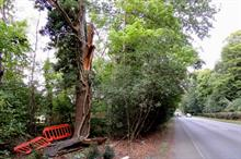 Council rapped over highway tree inspection following driver's death