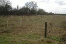 Contractor appointed to create new 21,000-tree bluebell woodland in Staffordshire