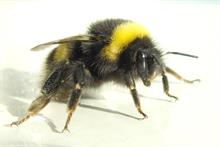 Research finds thiamethoxam bee risk