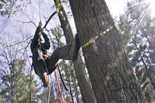 What's in store for arboriculture in 2017?
