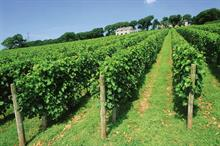 English wine producers aim for boost from Brexit