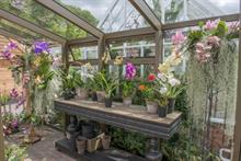 Tropical plants and succulents see 300% sales increase at garden centre