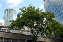 Public urged to get involved with London Tree Week