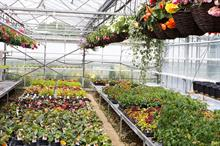 Latest accounts show turnover growth for ornamental growers