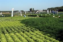 Dutch vegetable open days