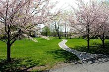 Ebbsfleet garden city masterplan to be unveiled