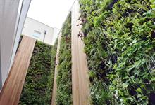 What role for green walls after Grenfell disaster?