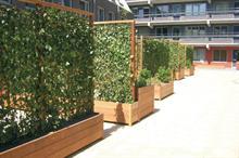 Green-tech launches Hedera 'green screens'