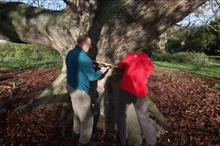 National Trust veteran horse chestnut confirmed as country's largest