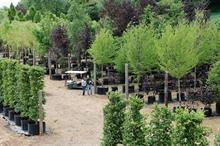 Tree grower tells of Brexit's toll on sales