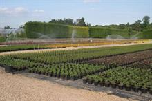 Nursery irrigation & drainage