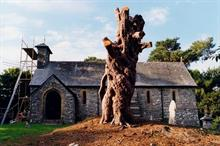 "Church ""incapable"" of stopping parishes harming ancient trees - Barrell"