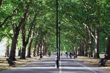 How will promised new urban trees be looked after?