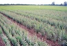 Biocontrols - Natural protection