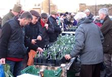 Myddleton House Gardens' Ultimate Snowdrop Sale busiest yet