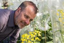 Research bodies combine to develop better brassicas